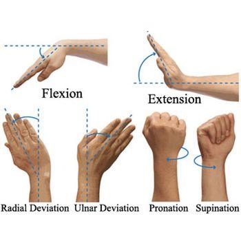 la flexibilidad de las muñecas es muy importante para las rutinas de calistenia